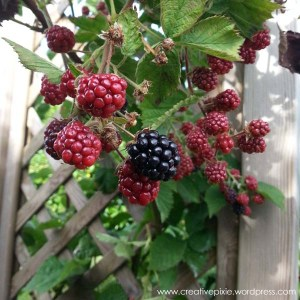 1 ripened blackberry