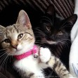 Flynn and Luna the Creative Pixie Kittens