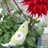 MIM creative pixie bower bird and dahlia