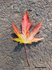 creative pixie autumn leaf