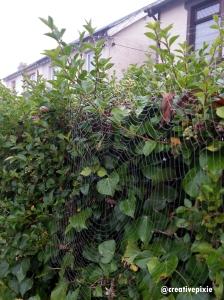 creative pixie spider web