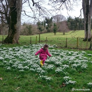 Miss E and the snowdrops