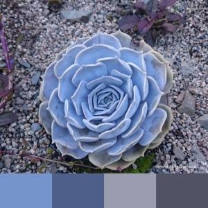 succulent-colours-thecreativepixie